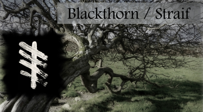 Blackthorn: Dark Mother of the Woods, Crone of the Triple Goddess, Witch Wood